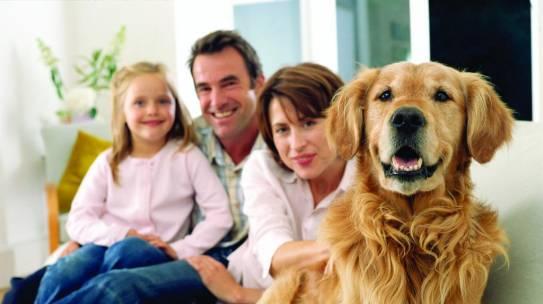 8 tips para elegir a tu perrijo!